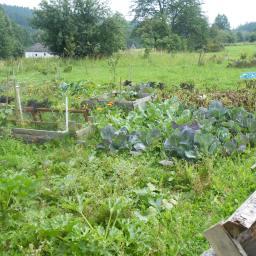 Síla rostlin – jídlo pěstované na míru